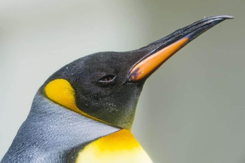 Google Penguin 4.0, la nueva amenaza para SEO va a llegar